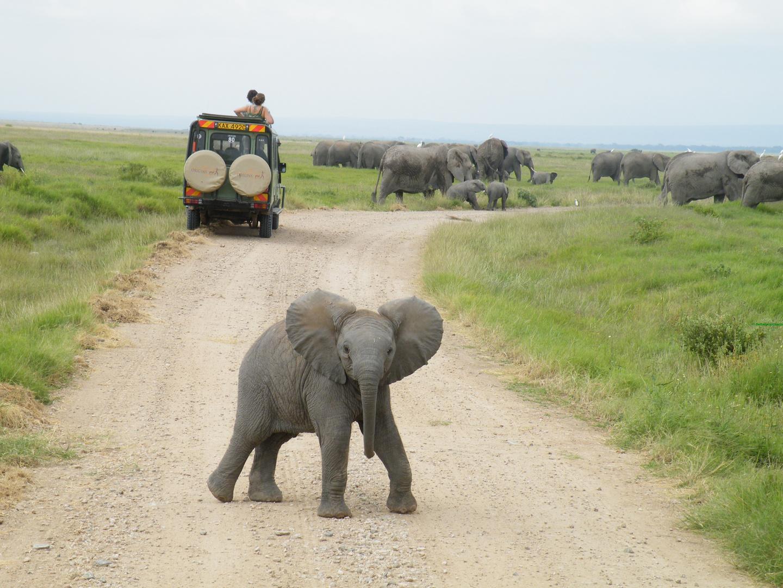 Neugieriger Elefant