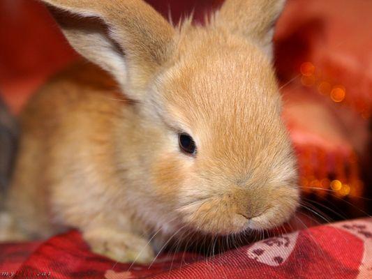 Neugieriger Hase