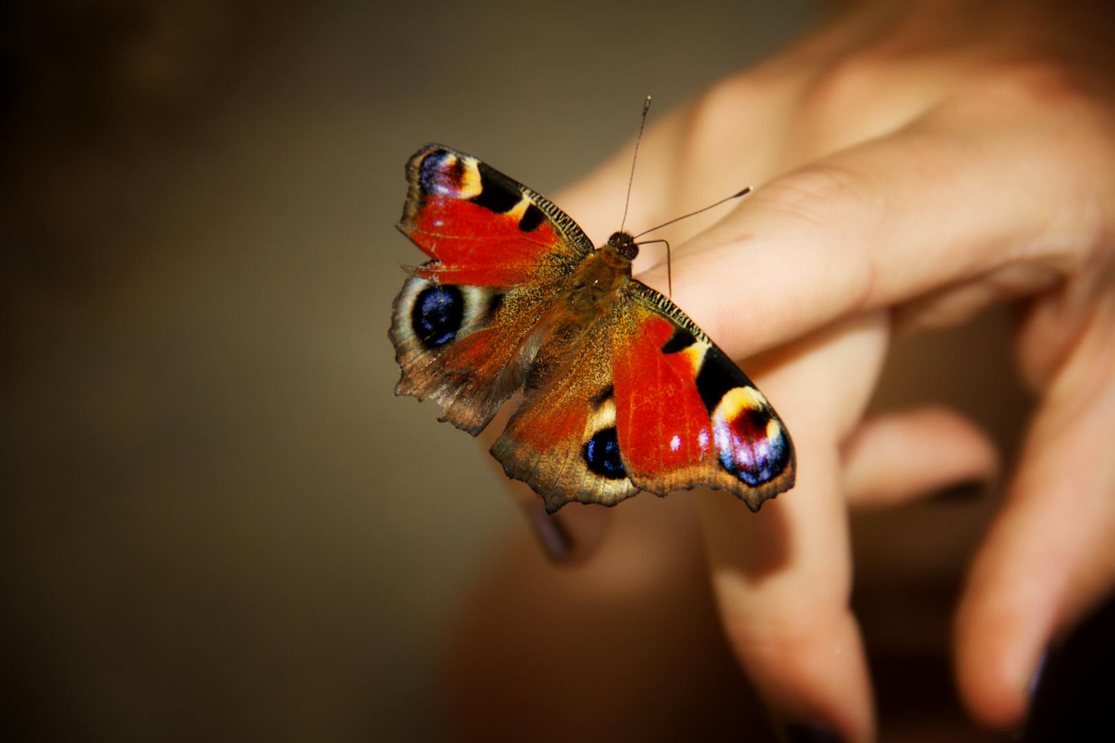 Neugieriger Schmetterling