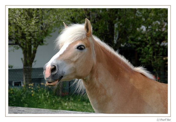Neugieriges Pferd