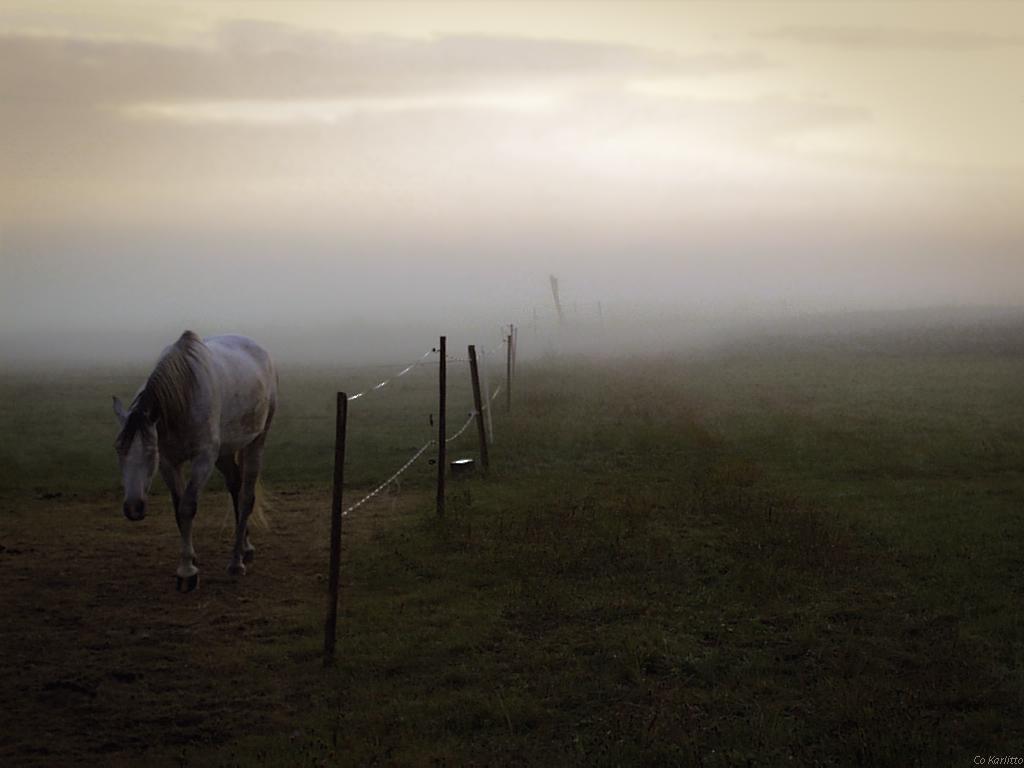 Neugieriges Pferd aus dem Nebel