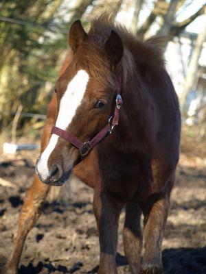 Neugieriges Ponyfohlen
