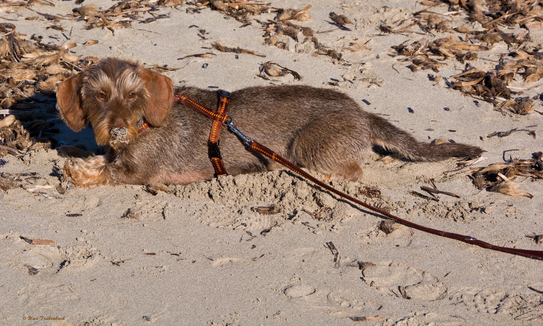 Neujahrsausflug an den Strand von Ses Salines (1)