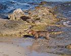 Neujahrsausflug an den Strand von Ses Salines (5)