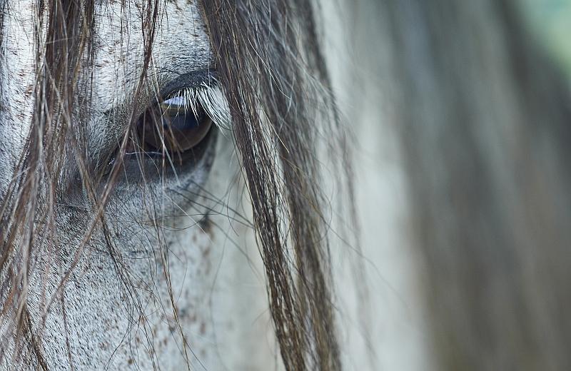 Neulich auf der Pferdewiese