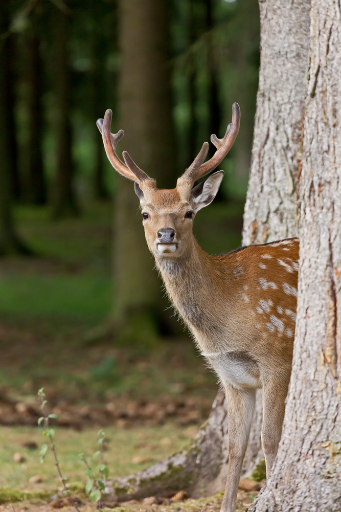 ... neulich im Wald