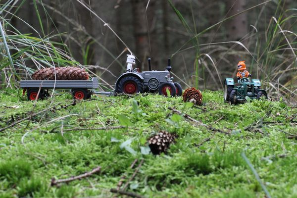 neulich im Wald 2