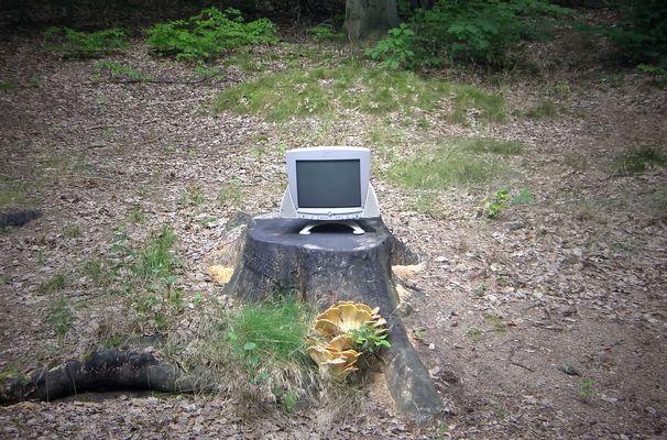neulich im Walde..