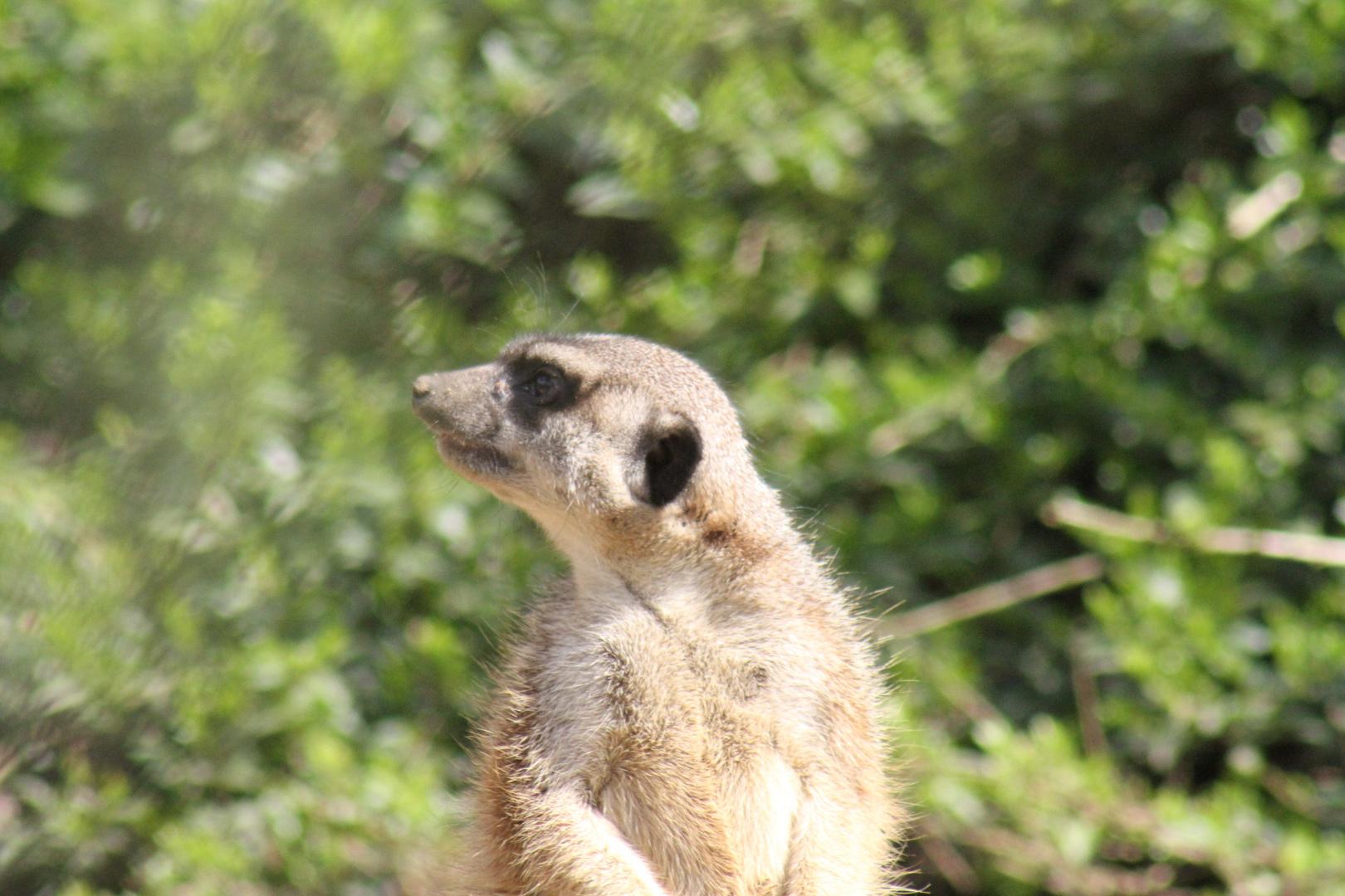 ...neulich im Wuppertaler Zoo
