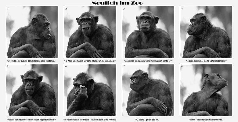 Neulich im Zoo