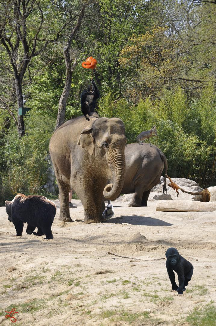 Neulich im Zoo gings rund!