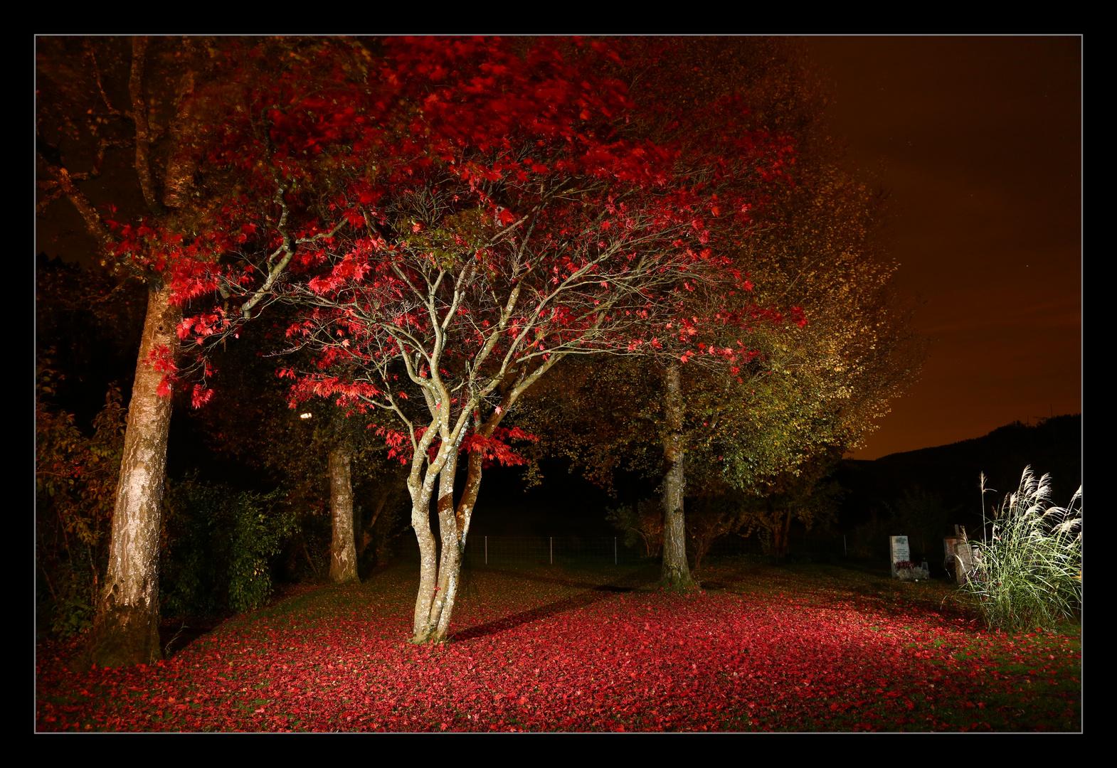Neulich Nachts auf dem Friedhof.....