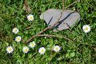 Neun Gänseblümchen