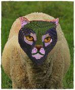 Neuschöpfung : Die Schafskatze