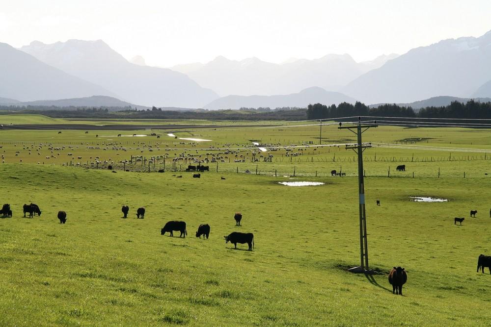 Neuseeland ein riesiger Golfplatz???