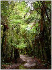 Neuseelands Urwald