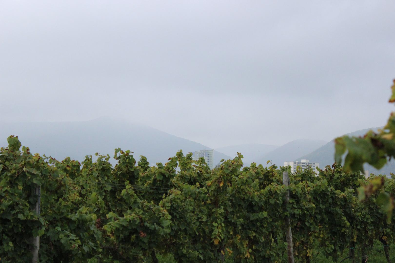 Neustadt im Nebel