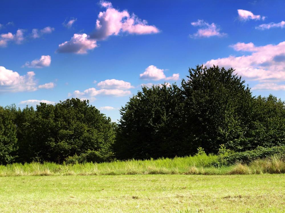Neuwieder Landschaft
