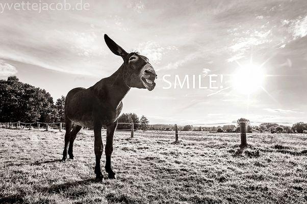 Never give up - NEVER SURRENDER - SMILE!