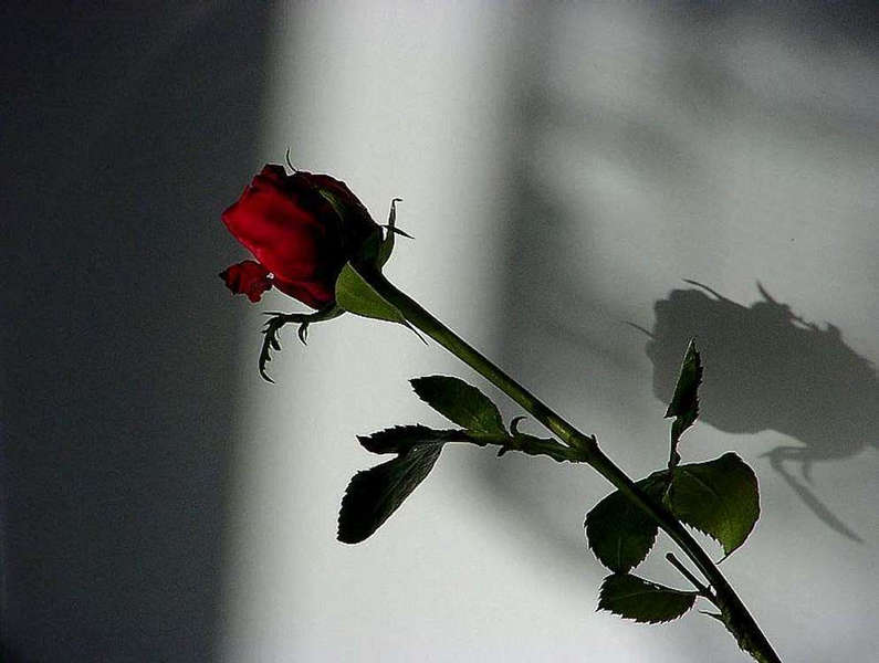 Never promised you a rose garden....