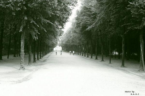 Neverending Boulevard