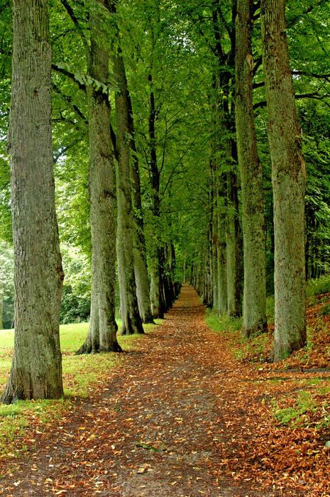 Neverending Pathway