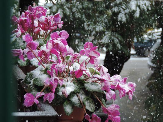 Nevicata del 31 dicembre 2014