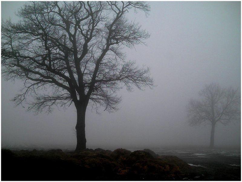 New Fog..