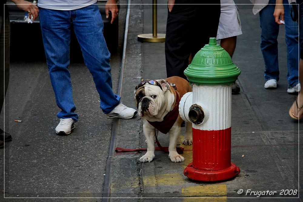 New York: Hund und Hydrant in Little Italy