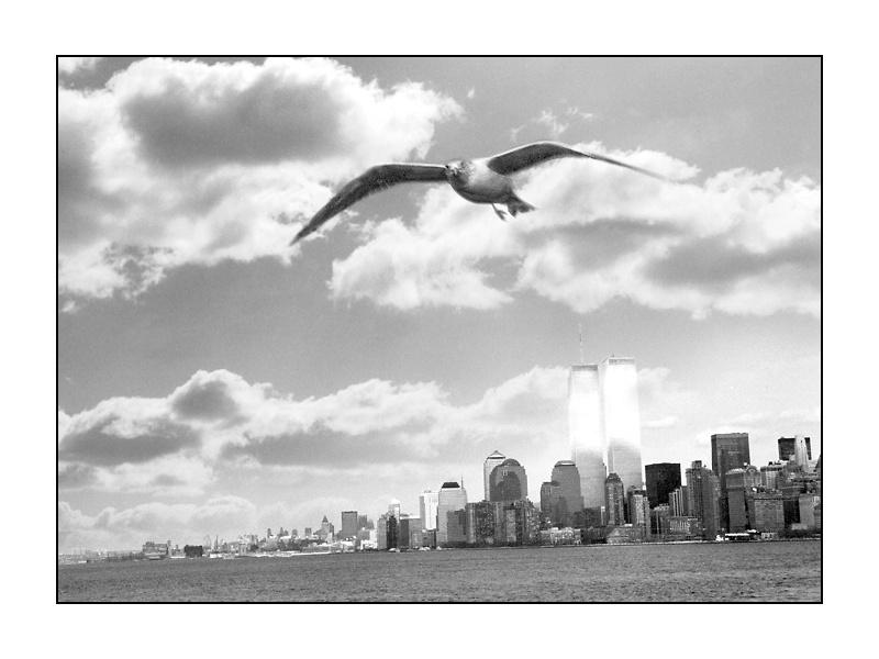 """New York mit """"Friedens""""-Möwe"""