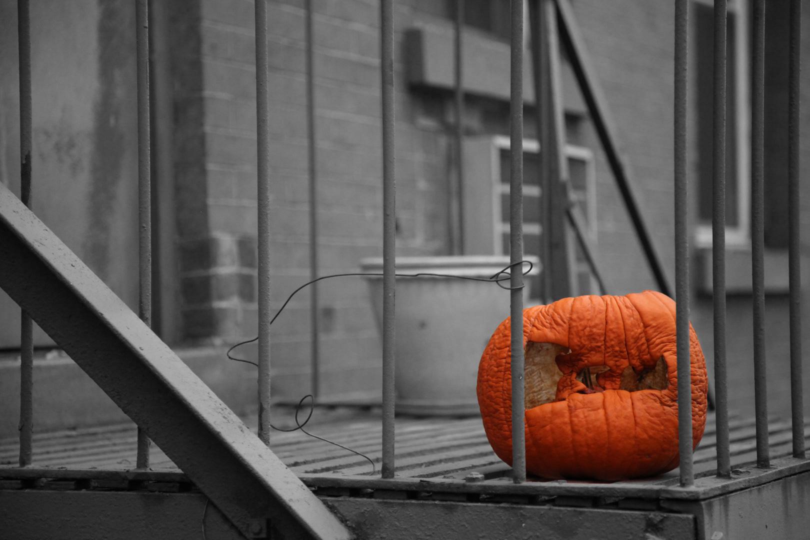 New York Pumpkin