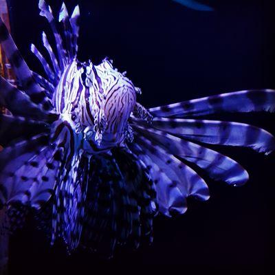 Newport Aquarium1