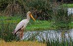 Ngorongoro Secrets ~ 6 ~