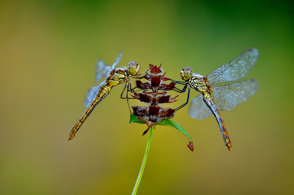 nice dragonfly