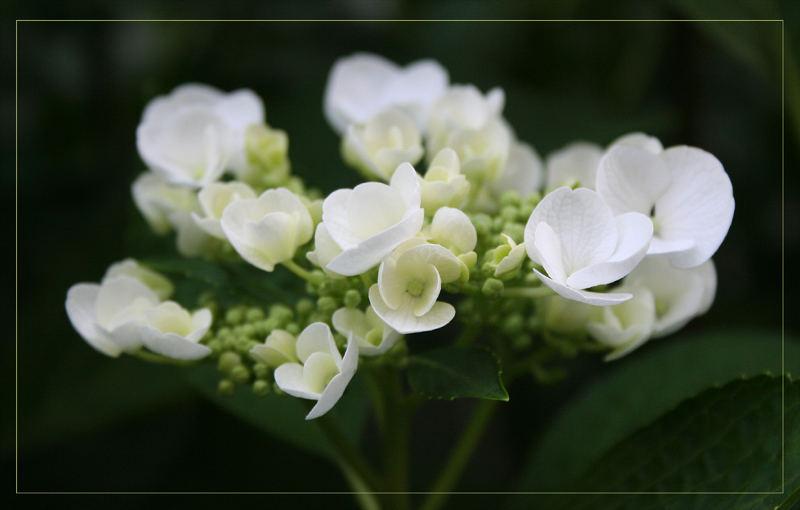 * - Nice Flower - *