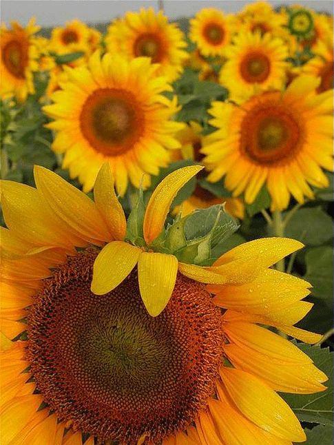 Nice Flower...Nice Day