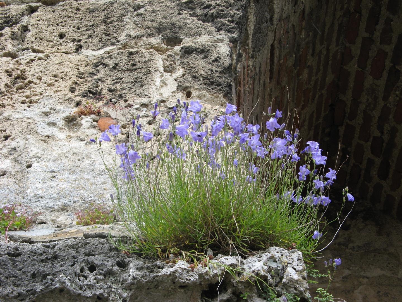 nice flowers on old stones