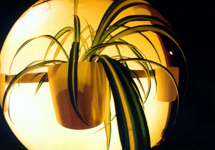 Nice plant