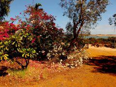 Nicht alles sieht  rostig aus in Hedland