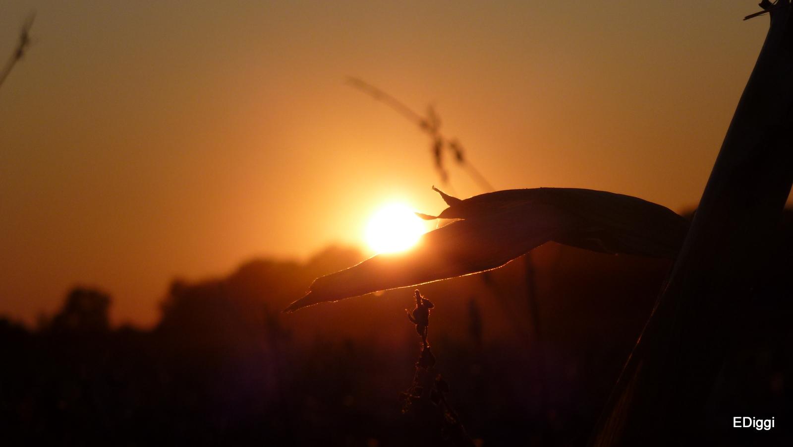 nicht ...... der letzte Sonnenuntergang