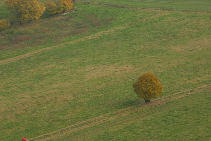 (nicht ganz) einsamer Herbstbaum