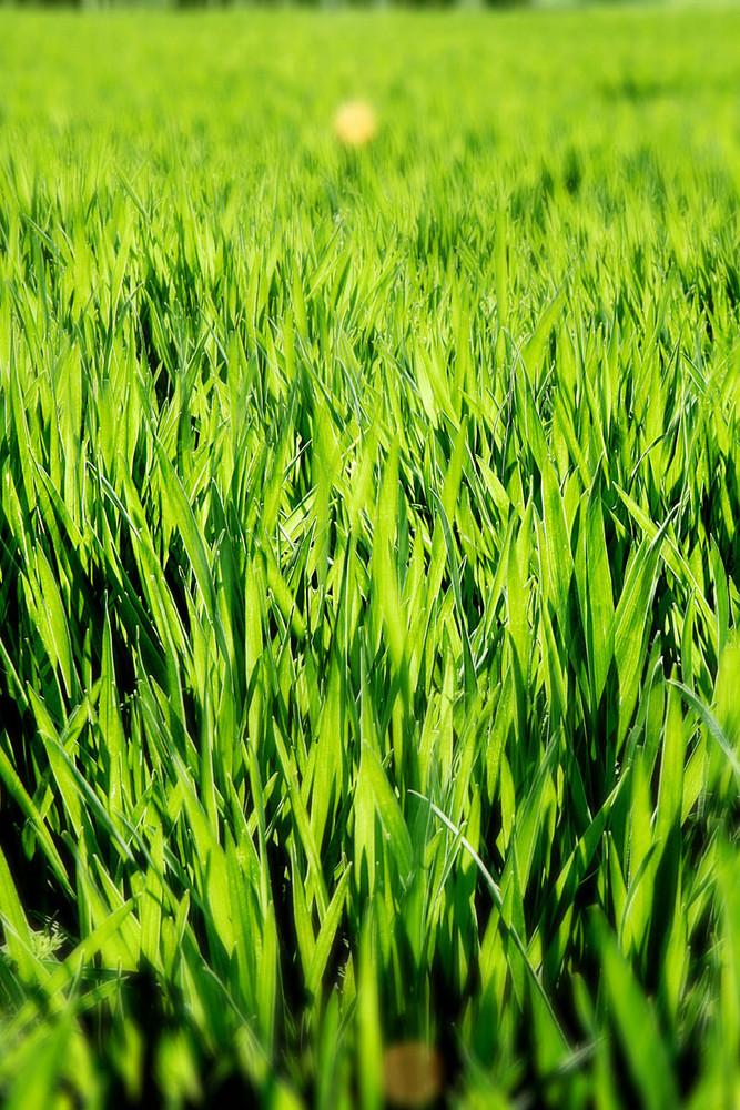 Nicht gleich ins Gras beißen ;)