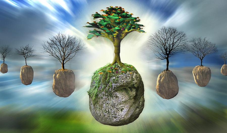 Nicht jeder Baum kann ein Wunderbaum sein...