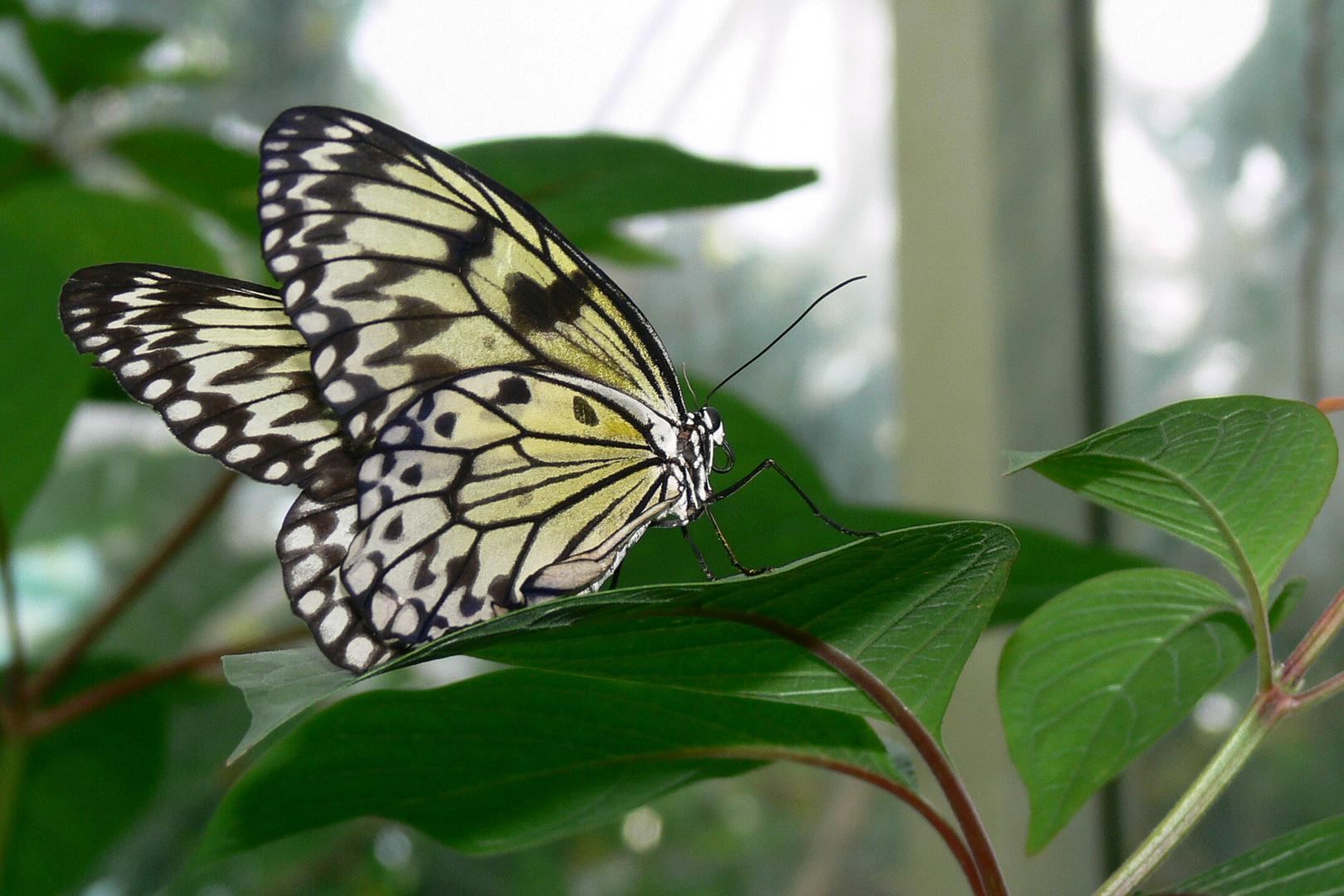 (nicht mehr) unbekannte Schönheit (Plantasia VI)
