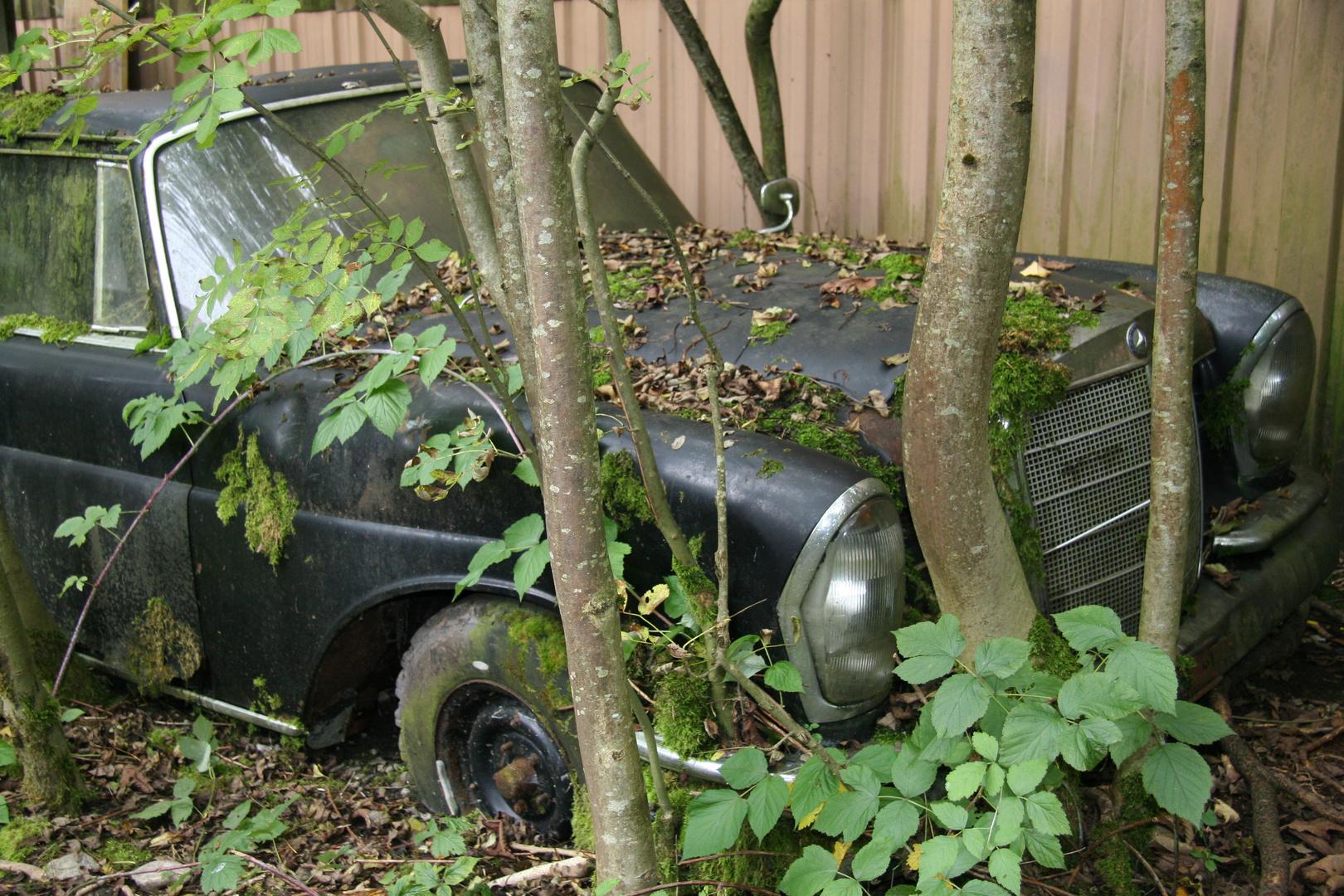 Nicht nur die Vehikel sind gestorben auch der schöne Autofriedhof!