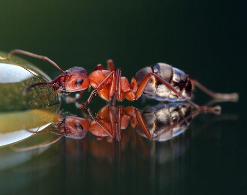 nicht nur Fliegen schlürfen gerne Honig...