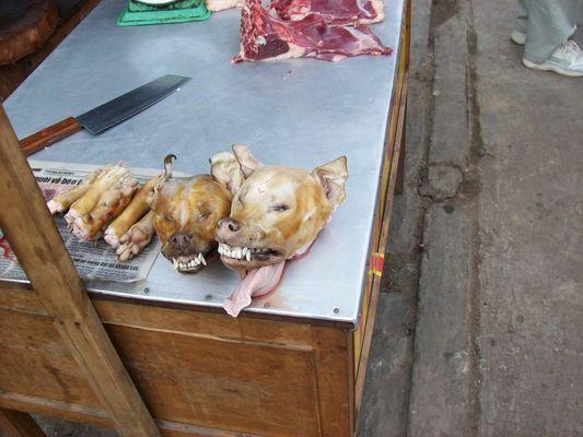 nicht nur in China essen sie Hunde...