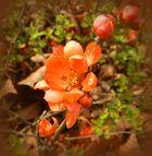 ~nicht nur in rot ,sondern auch in orange~