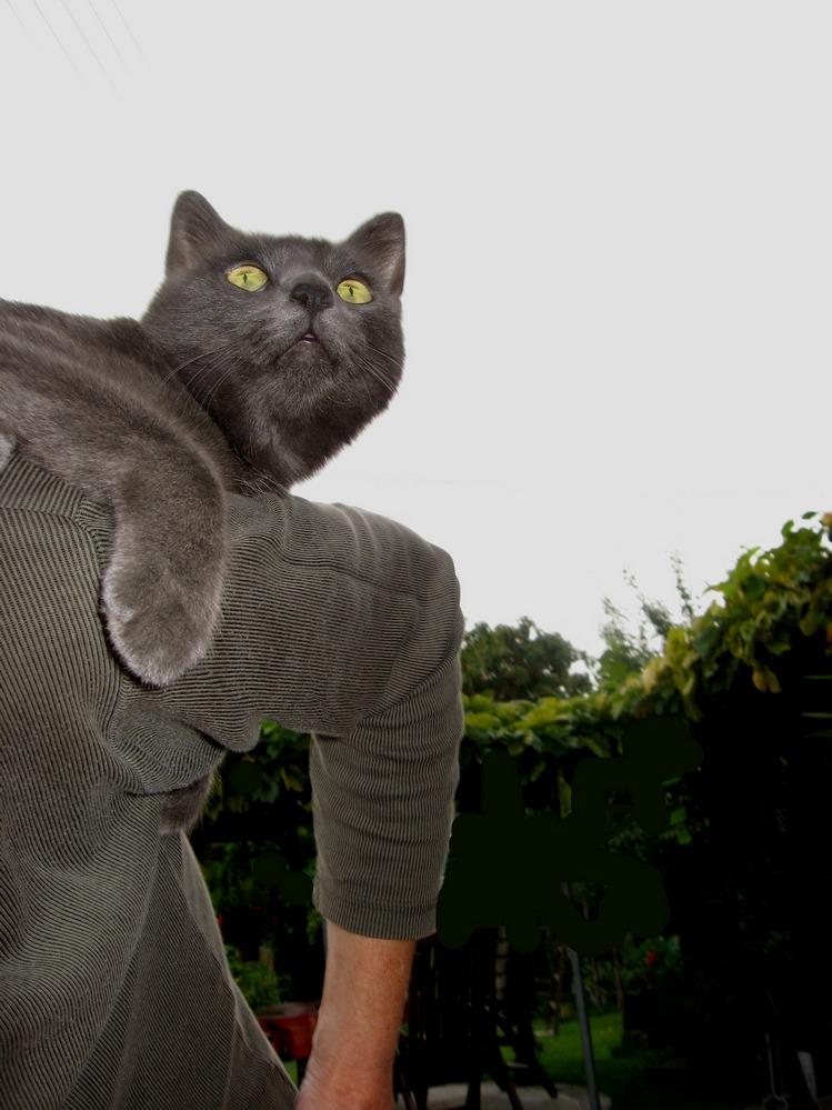 nicht nur Katzen machen einen Buckel..