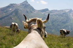 nicht nur Rindviecher genießen den Ausblick